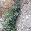 Vegetation at the bottom.