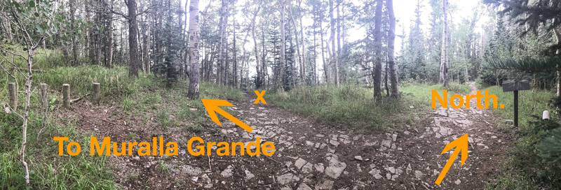 Another option for the approach is to park in the dirt pull out at the last switchback before the crest parking. Take the trail across the road and meet up with the North Crest Trail until you reach a large trail junction (see photo.) On the left there wi