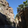 Rock and palm in Andreas Canyon, Palm Springs Area