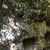 The V0 Boulder