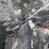 A bolt at the bottom. A belay bolt, I suppose. Not really needed.