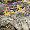 """Just to the right of """"Fandango"""" on 8.26.18 I bolted """"Georgia's Fly"""" 5.9+  some fun finger locks, jambs and faceholds. It joins at the top to share anchors with Frida's Bone -5.10. Each route is about 8 clips. Same start  for both routes."""