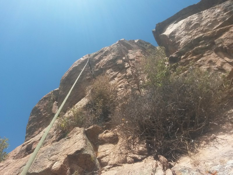 Looking up at the body length roof. Go left of the bushes, and the climbing is clean and good up to a big, juggy flake beneath the roof. The roof is splitter, and the bushes are well out of the way.