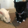 Chaucer, on left, was abandoned by his owners at a parking lot dumpster.  Stoker, on right, found a temporary home at a Central Florida diner.  Now living the resort life.