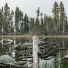 Harding Lake. Everytime I pass this lake I imagine Warren Harding chilling after some long days in Tuolumne Meadows.