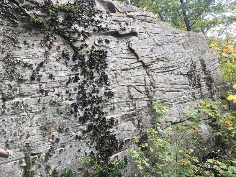 Interesting geological features