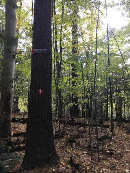 """A new sign marks the entrance to the """"whipping post"""" trail which will take you right to this boulder"""