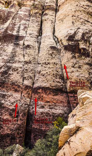 Three routes on Jungle Wall.