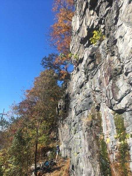 Climber, hidden behind tree, leading up Gravitas Free Zone (??).