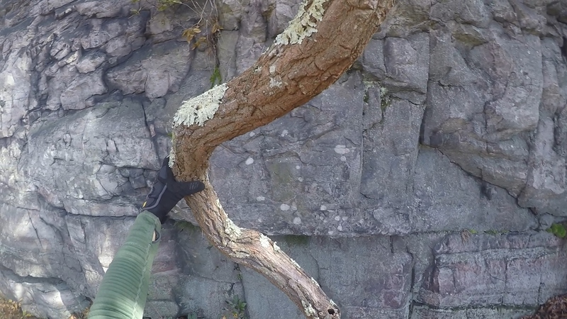 Twisted Tree Marking Start of When the Buffalo Roam