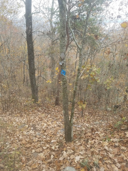 After picking up the trail south of Knob Wall, keep an eye out for one of these blue signs to lead you down to New Wall