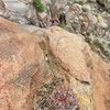 Awesome cactus mid way up... fantastic route