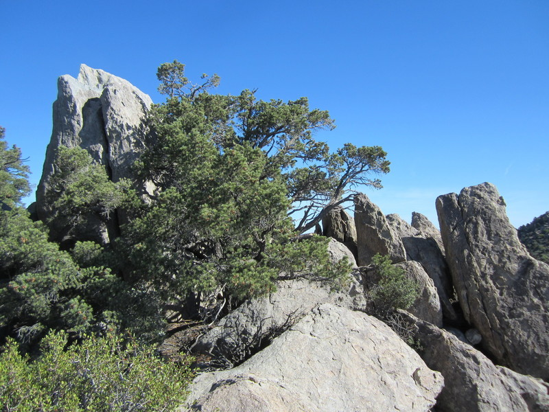 Packsaddle Rock, top left, with Big Raven Feather Crack disappearing behind the tree.