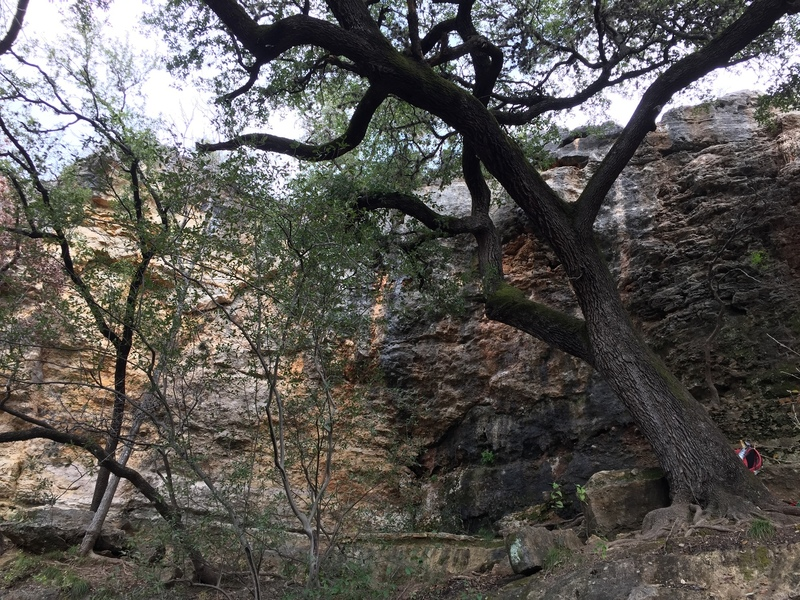 To the left of the large tree and boulder is Rhetoric Wall. To the right, is the far left of Dead Cats Wall.