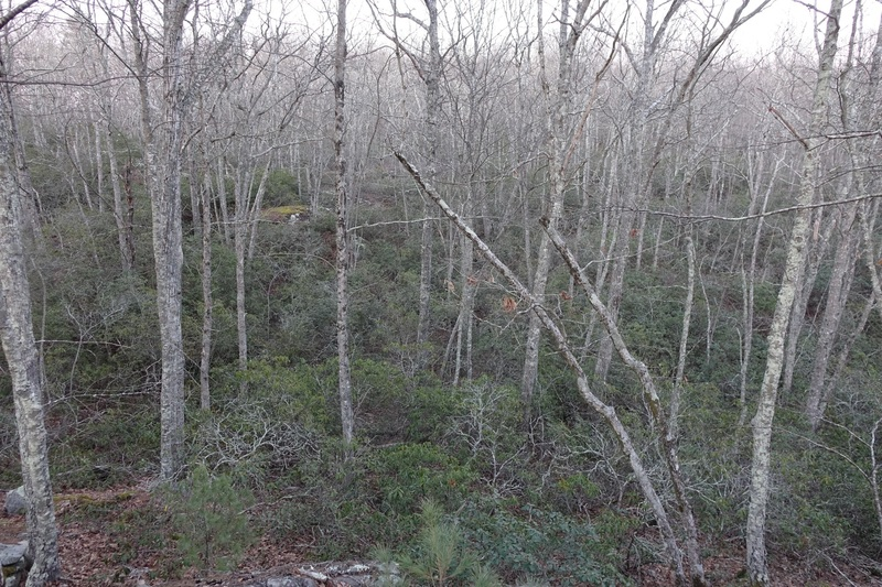 Especially with the leaves out, in the thick rhododendrons, swamps and many little ridge lines of the southern parts, it is easy to get lost when exploring off trail. I suggest taking a GPS so you can get back to the stuff you find