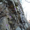Photo of middle section of Paw Paw Overhang wall from east.