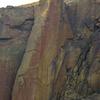 Climbing ginger snap Aug 2013