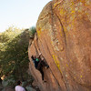 Owen lichen the cracks