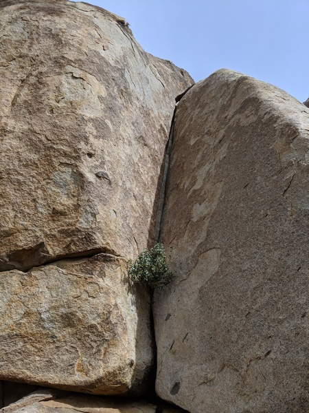 Oh Pinyon Crack from the he base. Short but amazing!