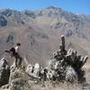 The top of a columnar basalt ridge, Colca Canyon, Peru