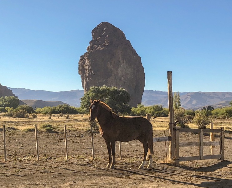 Piedra Parada, with one of the locals looking regal.