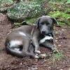 Stone Balone Mac Dog Barone (Stoney)