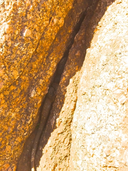 Chuckwalla hiding in the crack right at the top of the crux! Not exactly what you want to put your fingers into...