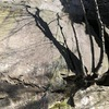 The crack/tree that marks the beginning of the route.