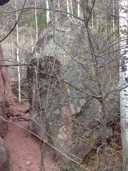 The birch tree makes padding it up difficult.