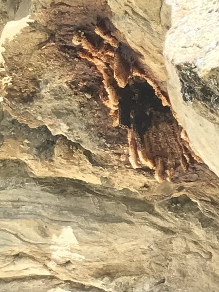 It looks like rust or calcite deposits from the ground, but that's actually honeycomb. There is a decent sized bee nest in the shallow cave, climbers left of the belay. They didn't bother us at the belay, just something to be aware of.