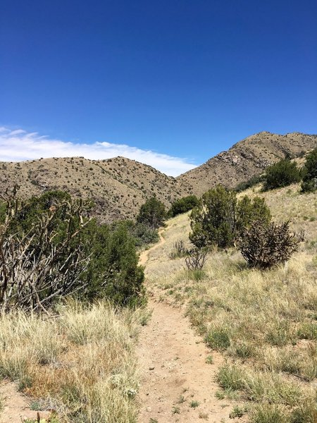 Trail going north to Juan Tabo Canyon