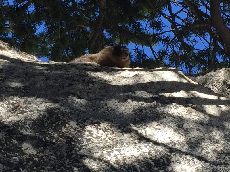 The creatures that inhabit these boulders are named after the clothing company, Marmot.