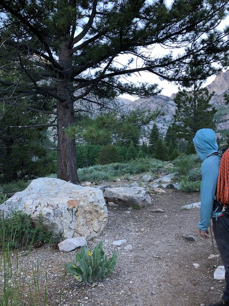 as of 7/2019, there is no turn off sign to diverge towards Little Slide Canyon. however, the path diverges in between these two larger rocks, with this pine as a decent land marker if you're having trouble. Robinson Creek is easily crossed via felled tree