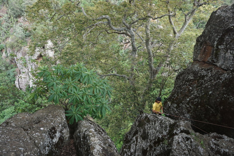 Setting up a TR. Single bolt and/or a dombeya tree can be used to secure a separate line to protect the setup/rappel.