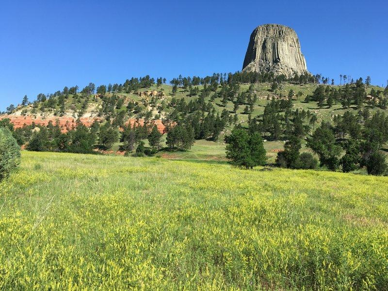 Verdant Tower Meadow
