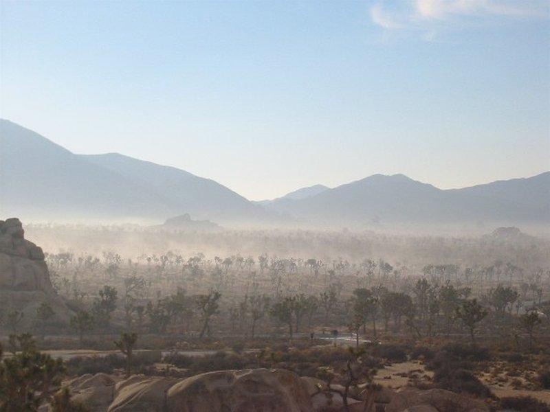 Morning mist, Joshua Tree NP CA