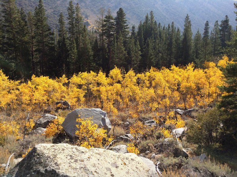 Fall in Rock Creek Canyon, Tom's Place CA