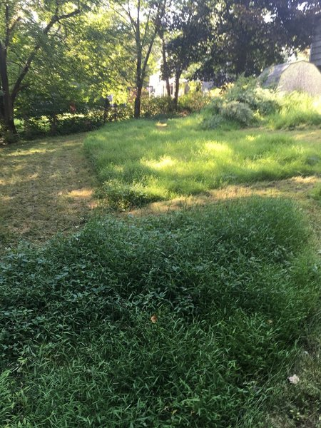 I'd rather mow the Lawn~plus a Day for Ankle/Knee Rest Tomorrow