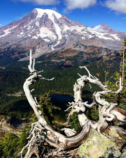 Mt. Rainier from the summit of The Castle.