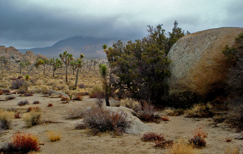 Colors in the fog - Joshua Tree NP