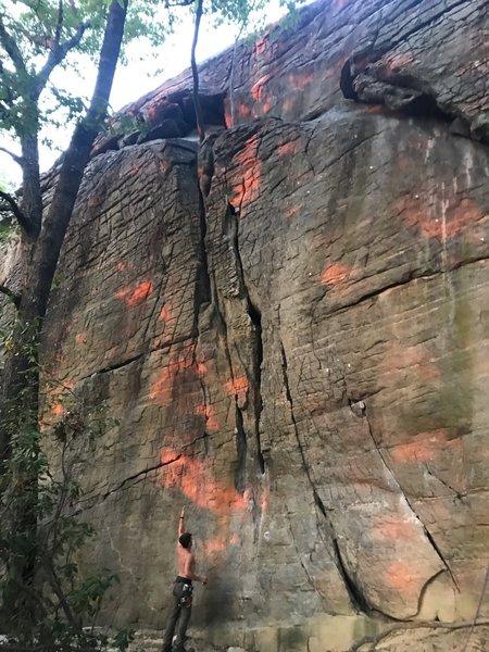 Spray paint sunset through the trees on Brick Wall