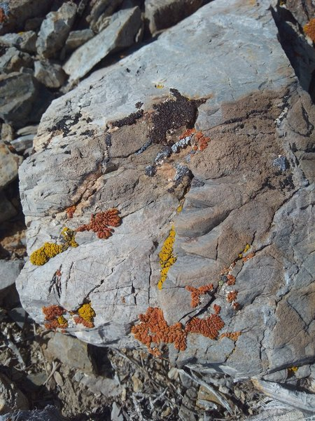 Limestone in Mcafee Canyon, Central Nevada