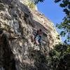 Martin climbing