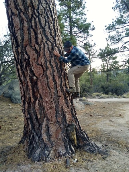 Warming up at Holcomb, San Bernardino Mountains