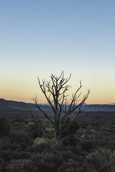 Desert sunset: 11/24/2019