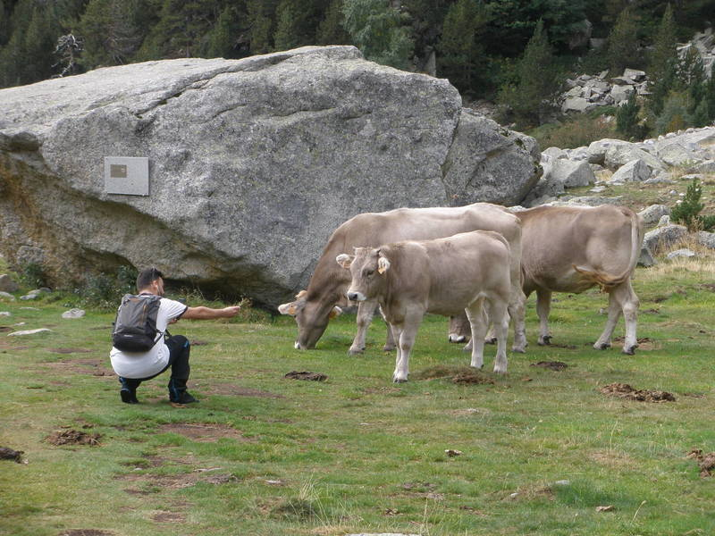 Cows ! (Unknown photographer) and one of the many boulders (BUT...watch your landing !)