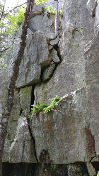 The photo shows the fist crack of Iron Fist to the ledge with ferns and the first part of Captain trad up the blocks to the optional belay tree near the top of the photo.
