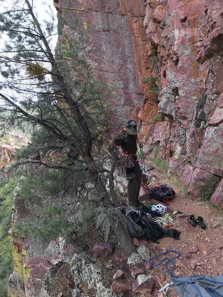 Pine tree at the base of Closer. Traverse ropes heading to Main Wall-South just beyond the tree.