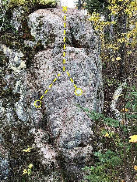 Poplar Mantle