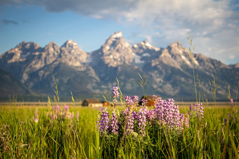 Late July view of the tetons